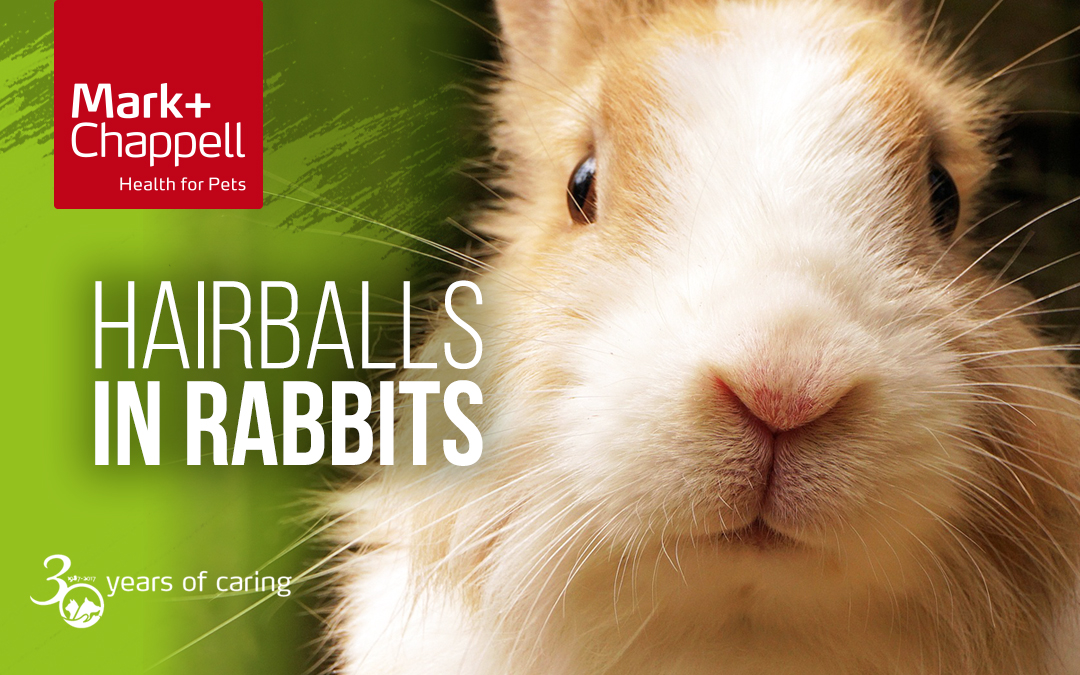 Hairballs in Rabbits?