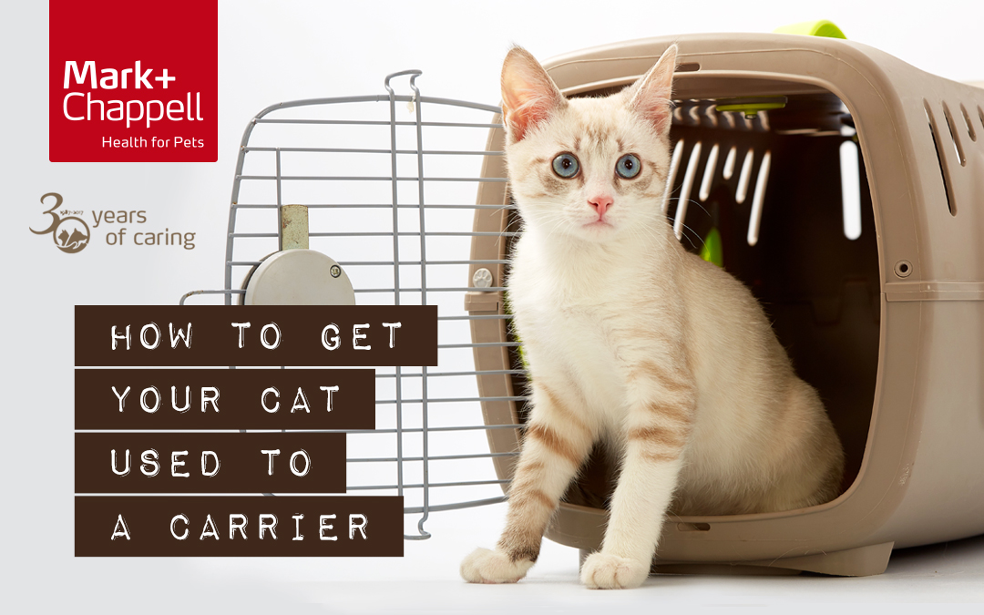 How to get your cat used to a pet carrier
