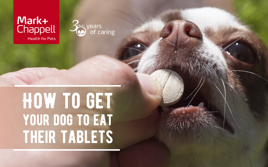 How To Get Your Dog To Eat Their Tablets