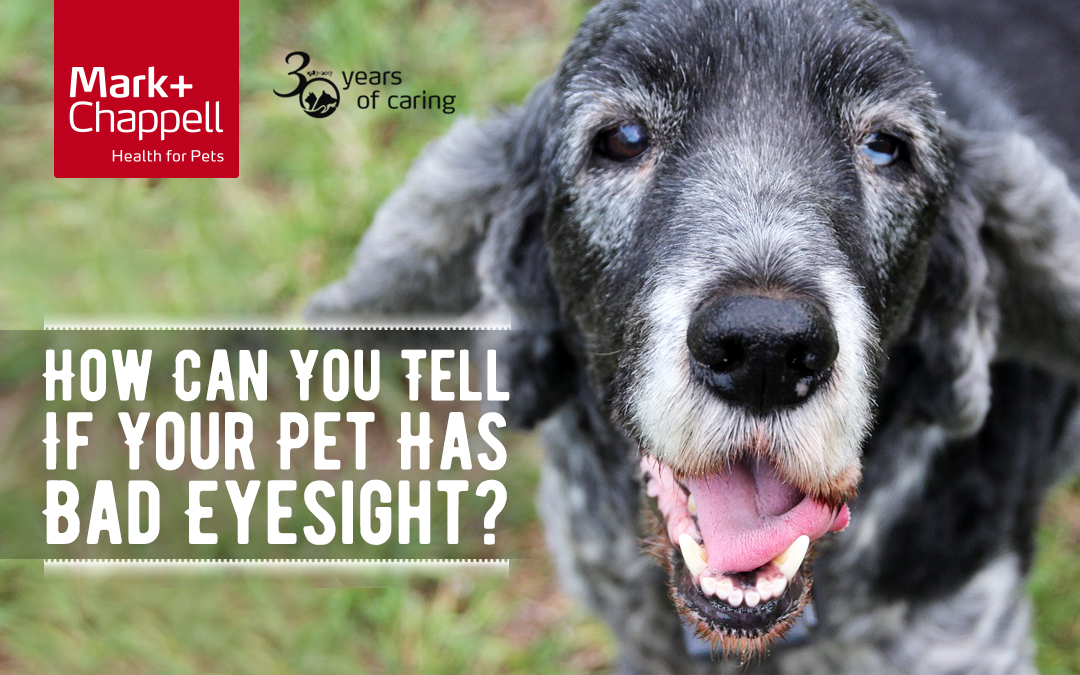 How Can You Tell If Your Pet Has Bad Eyesight?