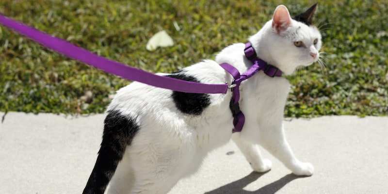 Travelling with your pet - walking cat with harness - Mark + Chappell